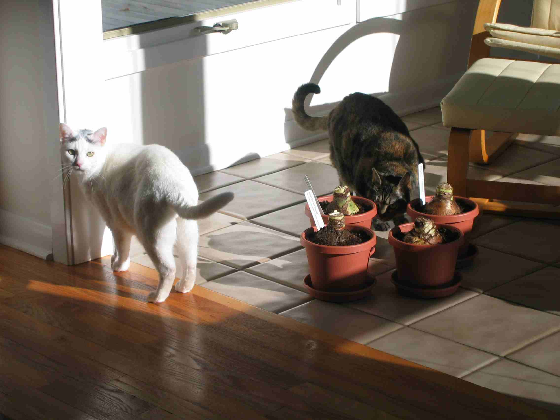 petrushka and arlo and plants